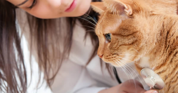 How Pet Health Insurance Works