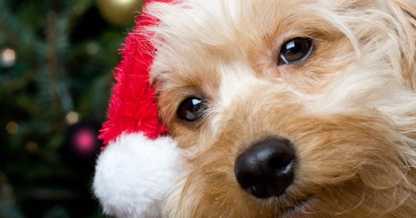 New Pet Good Gift For Christmas