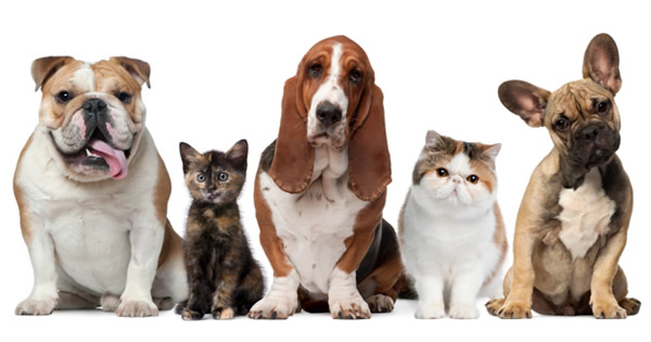 Main Benefits Of Spaying And Neutering Your Pet