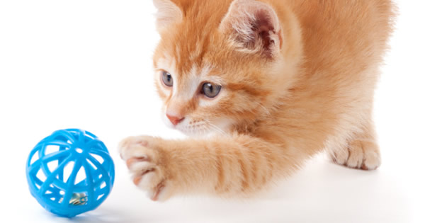 The Best Cat Toys