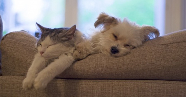 Carbon Monoxide Poisoning and Pets