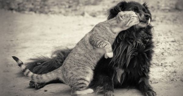 Can Cats And Dogs Be Friends