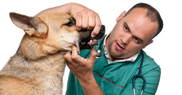 Proper Dog Dental Care