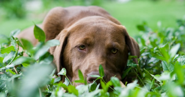 Dog Vomiting: What to Do