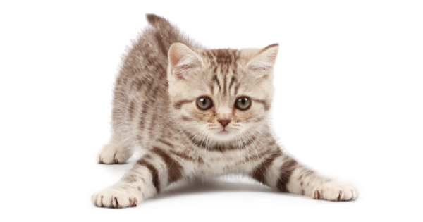 Fading Kitten Syndrome
