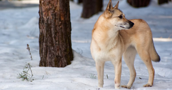 Frostbite Prevention in Dogs and Cats