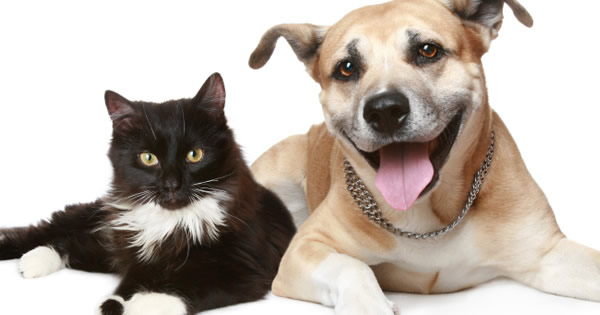 Good Nutrition For Healthy Pets