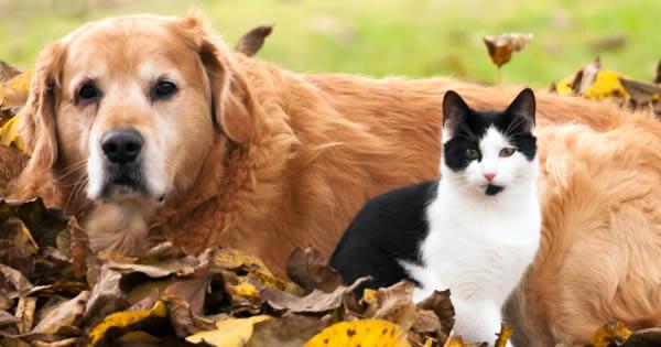 Heart Diseases In Pets