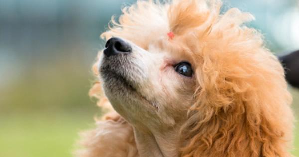 ... white dog breeds hunting dog breeds dangerous dog breeds small dog