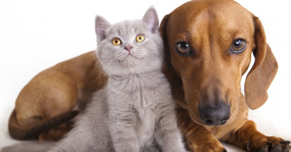 How to Keep Your Cat and Dog Dandruff-Free
