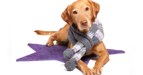Keeping Pets Warm and Safe During the Winter