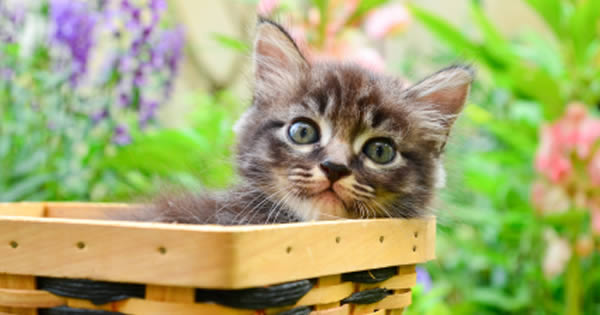 Kitten Basic Care: How to Raise a Kitten