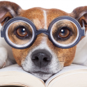 Pet Insurance Glossary & Terms