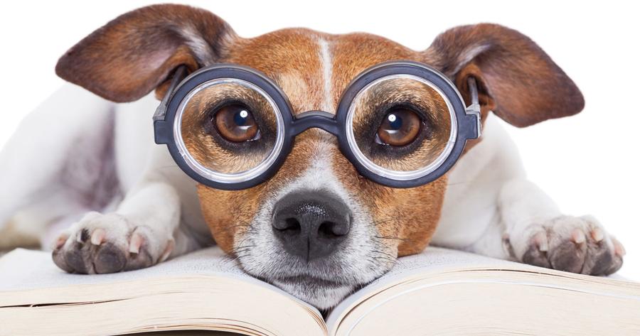 Pet Insurance Glossary