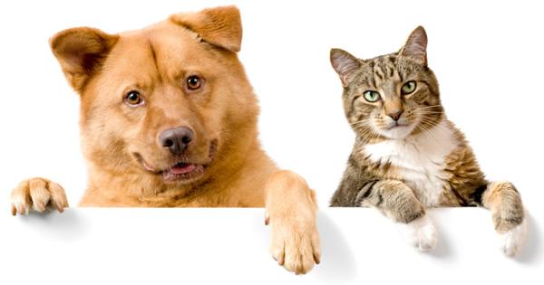 Pet Insurance Rates PetPremium