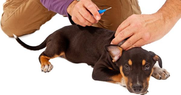 Facts About Microchipping