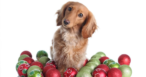Pet Proofing Your Decorations For Christmas