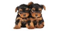 Puppy Basic Care: How to Take Care of Puppies?