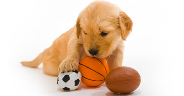 The Hidden Dangers In Dog Toys