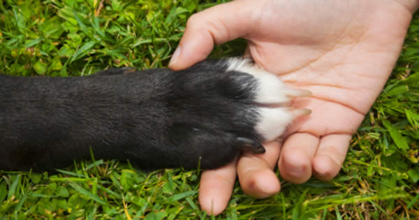 How Often should you Trim your Dog´s Nails