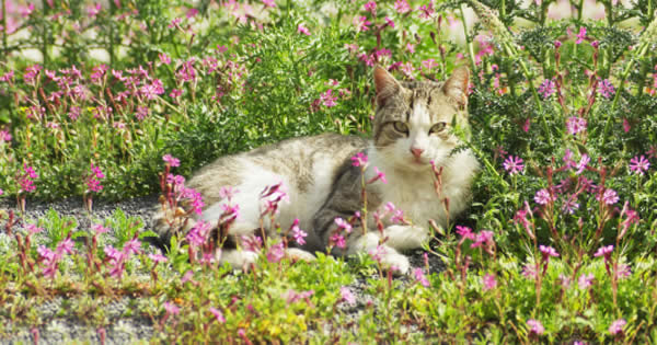 Why Cats Go Nuts for Catnip