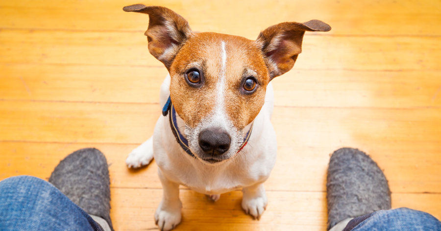 5 Things to Consider in a Pet Insurance Policy