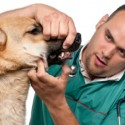 Things to know before getting pet health insurance