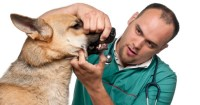 How to Brush Your Dog's Teeth Properly?