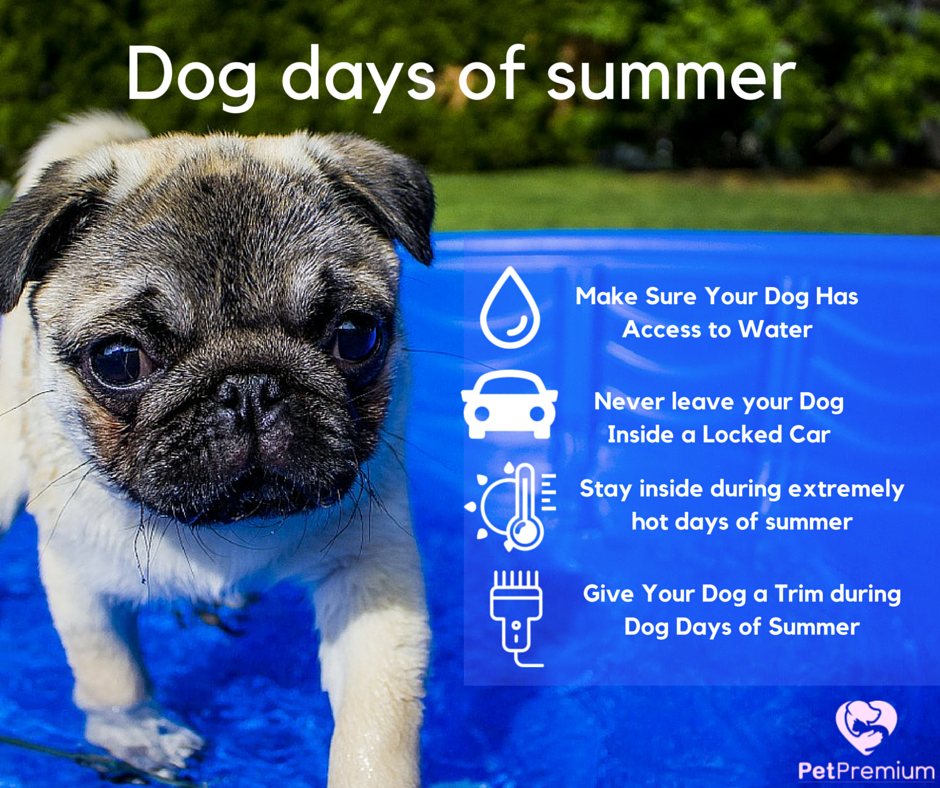 Summer tips for your dog