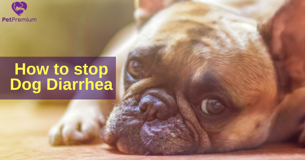 Tips to treat dog diarrhea