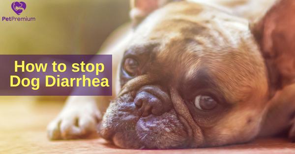 How To Stop Dog Diarrhea