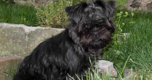 Understanding Pectus Excavatum In Dogs