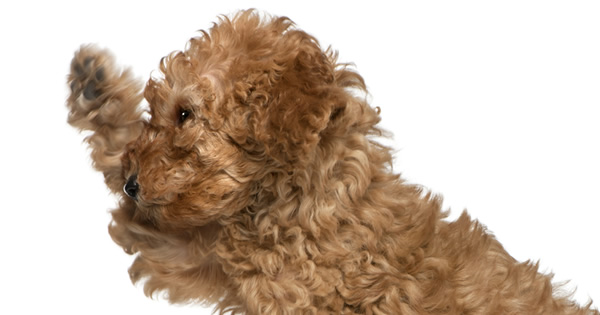 Top 5 Best Apartment Dogs Today