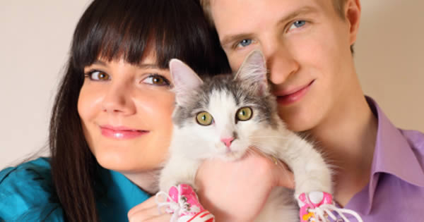 Cats 101 Facts About Cats