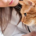 Comparing pet health insurance services