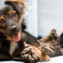 Dog Insurance and Cat Insurance Differences