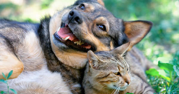 Enhanced Pet Insurance Coverage
