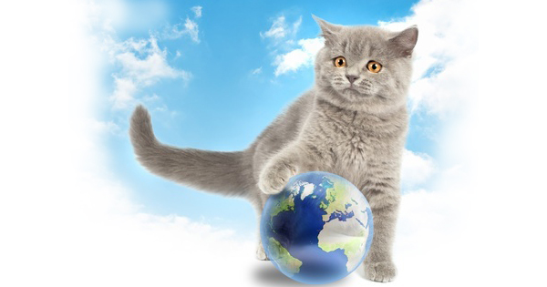 Most Interesting Guinness World Records Cats