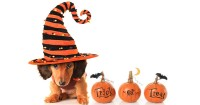Halloween Costumes for Dogs: Pet Friendly or Not?