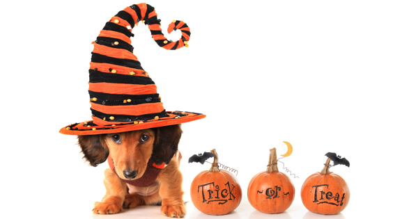 Halloween Costumes For Dogs Pet Friendly Or Not