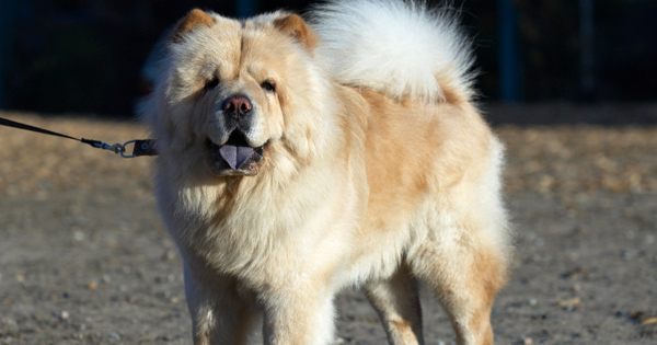 How to Stop a Dog From Shedding?