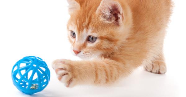 Kittens 101