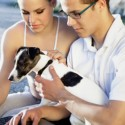 Top things to know about pet health insurance
