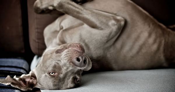 Best Wet Dog Food >> What is Mange in Dogs?