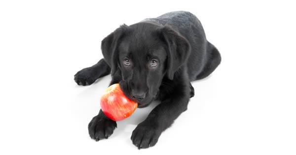 People Food As Natural Dog Treats
