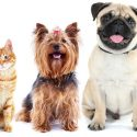 Pet Insurance Myths