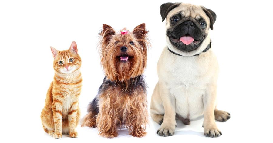 Pet Insurance Myths
