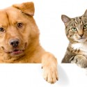 Prices and plans of pet health insurance