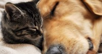 How to Keep Your Pet Safe During Natural Disasters?