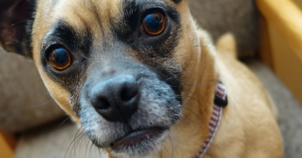 Proper Care For Dogs In Their Senior Years